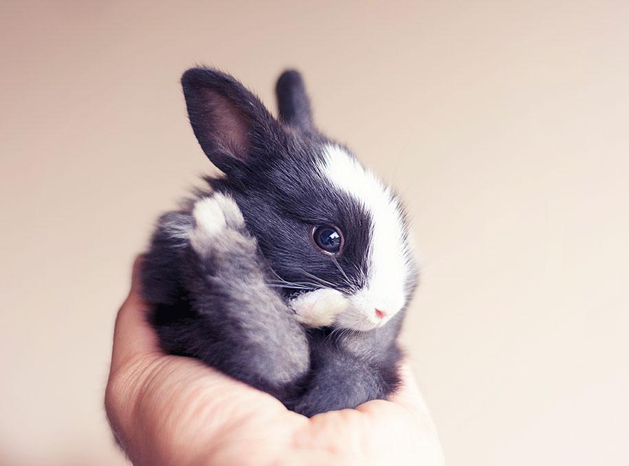 Первые 30 дней из жизни милейшего крольчонка