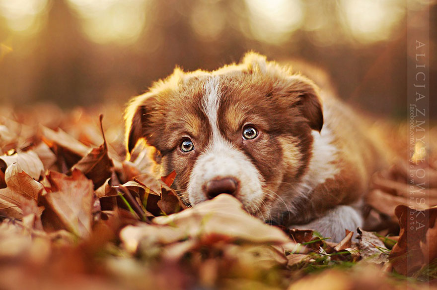 dog-photography-alicja-zmyslowska-13__880