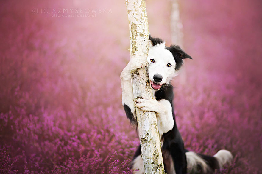 dog-photography-alicja-zmyslowska-14__880