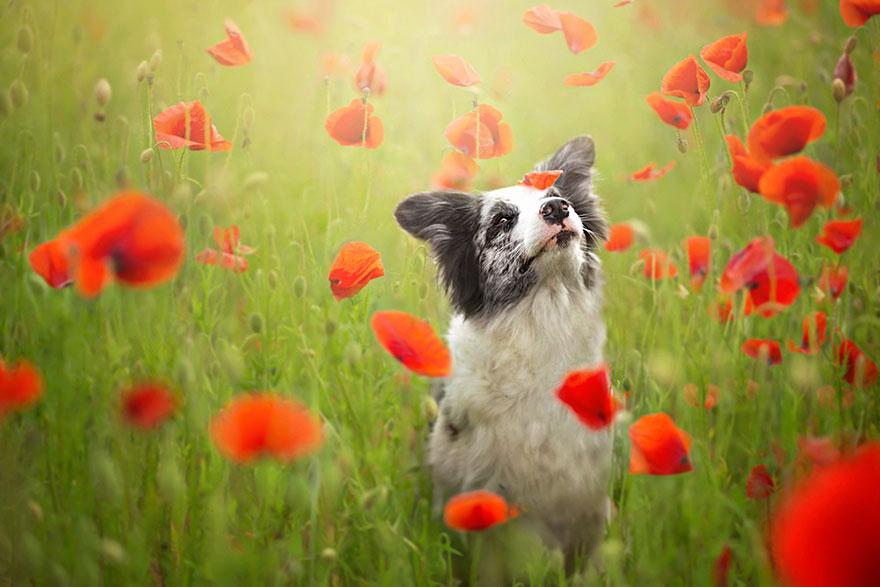 dog-photography-alicja-zmyslowska-4__880