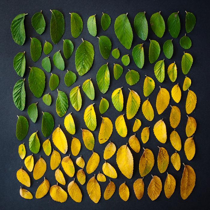 everyday-objects-arrangements-emily-blincoe-6