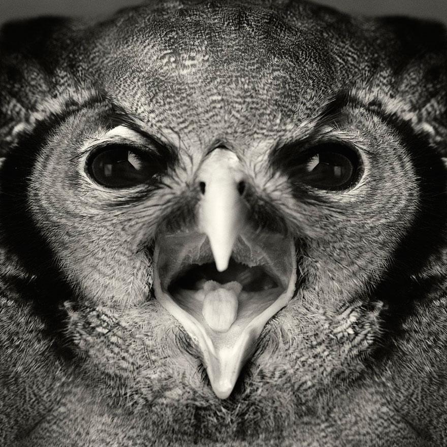 expressive-animal-portraits-human-emotions-vincent-legrange-13
