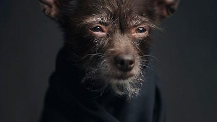Выразительные портреты животных, которые бывают так похожи на людей