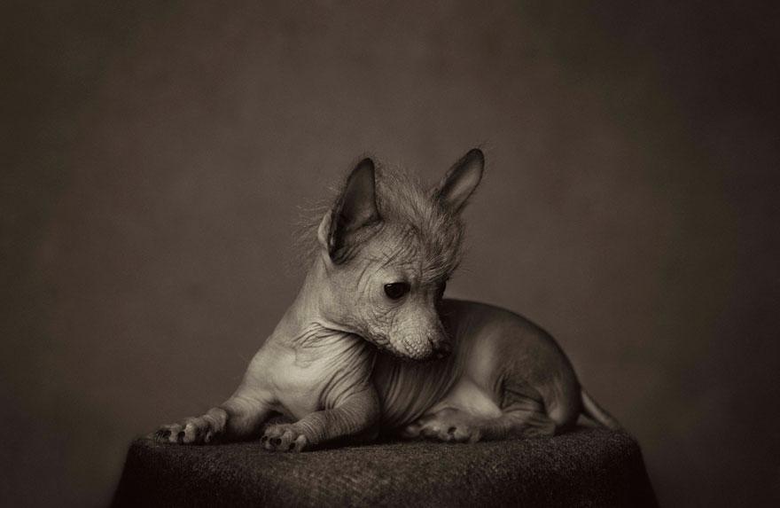 expressive-animal-portraits-human-emotions-vincent-legrange-4