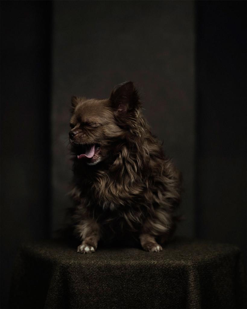 expressive-animal-portraits-human-emotions-vincent-legrange-5