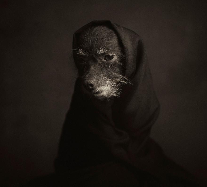 expressive-animal-portraits-human-emotions-vincent-legrange-9