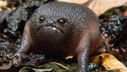 10 самых удивительных видов жаб и лягушек в мире