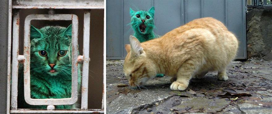 green-cat-bulgaria-6