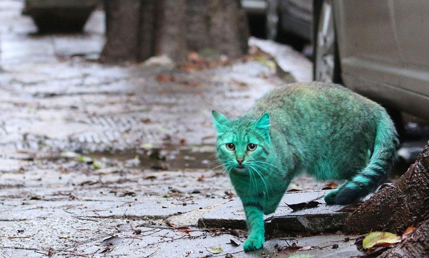 green-cat-varna-bulgaria-9