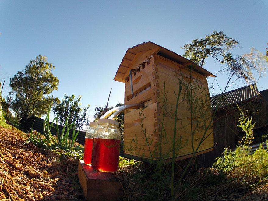 Инновационный улей — радость для пчёл и пчеловодов