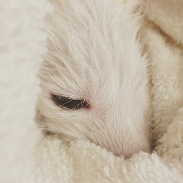 white-fox-cub-rylai-12