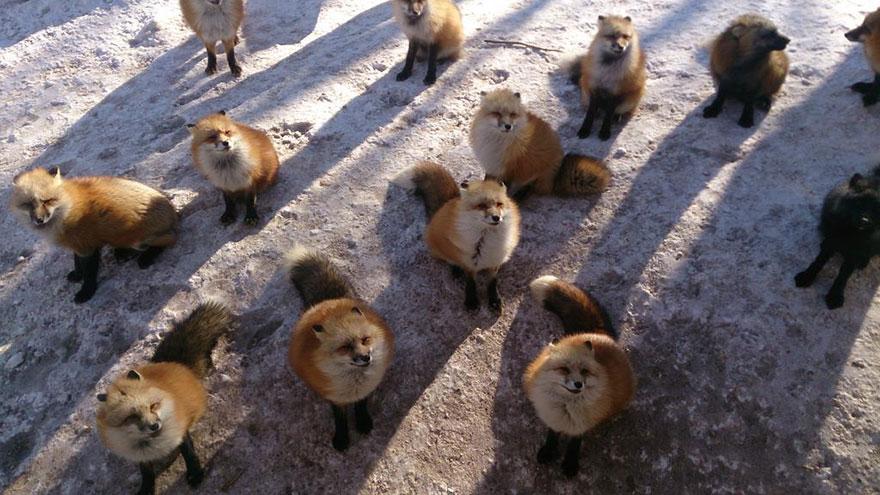 zao-fox-village-japan-14