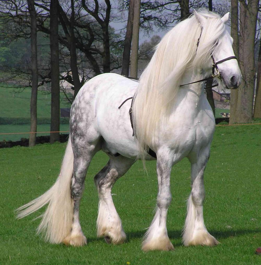 Першеронская лошадь