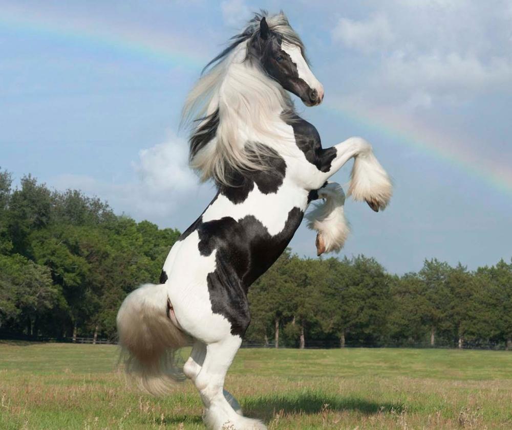 Цыганский конь
