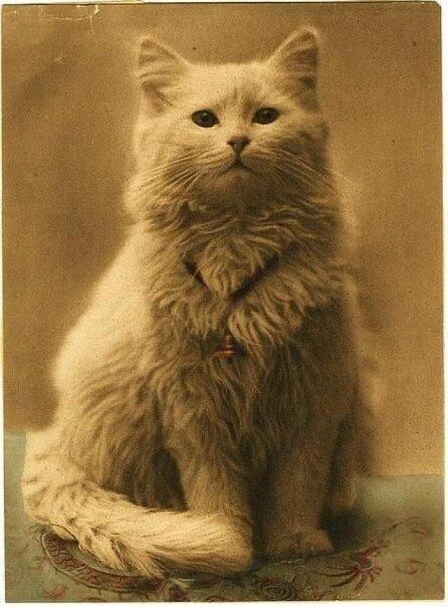 Одна из первых в мире фотографий котов (1880-1890)