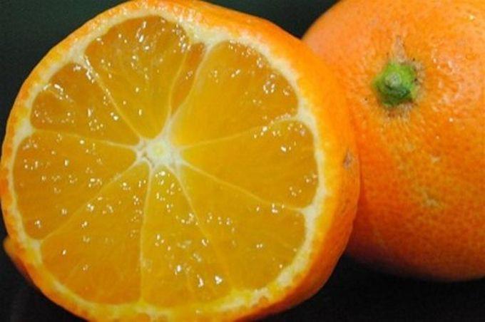 Рангпур — гибрид мандарина и лимона