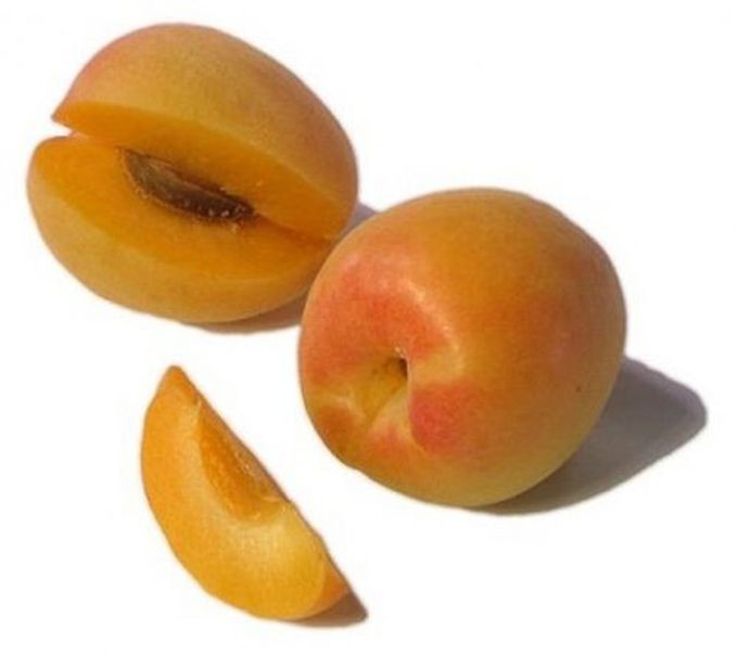 Априум — гибрид абрикоса и сливы