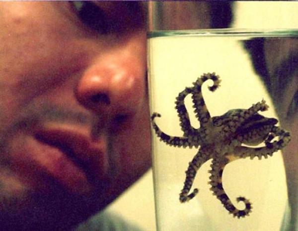 Не волнуйтесь, в Австралии встречаются и другие опасные морские существа. Например, синекольчатый осьминог, яд которого смертельно опасен, а противоядия не существует
