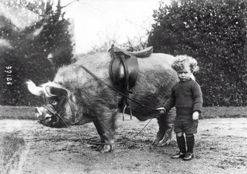 Мальчик и его «транспорт». США, начало XX века.
