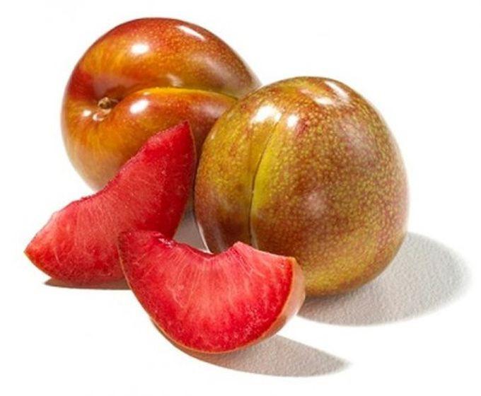 Нектакот — гибрид нектарина и абрикоса