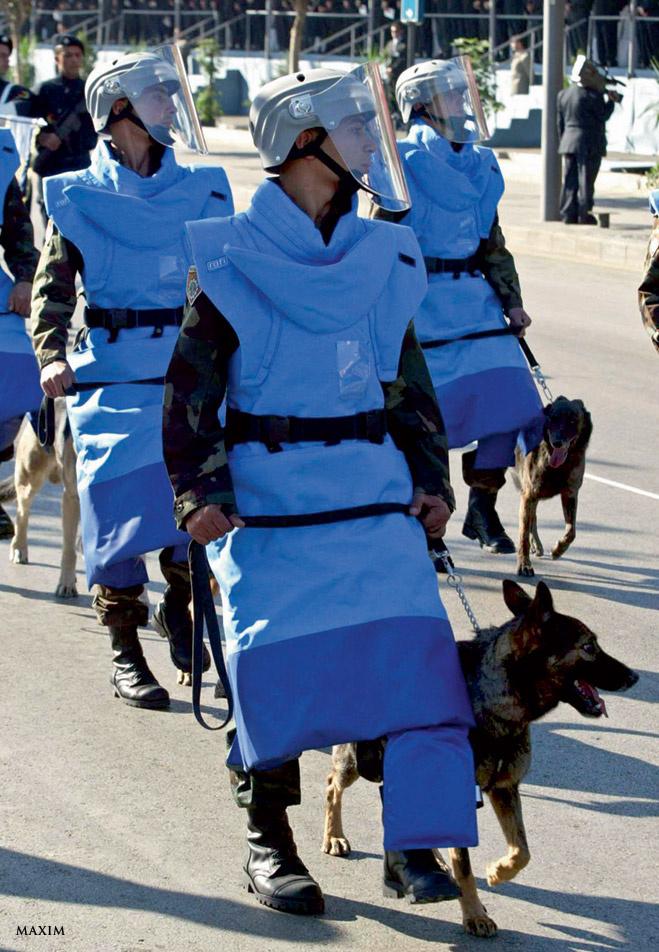 А так выглядят доблестные солдаты-кинологи из дивизиона К7 с их четвероногими подчиненными. Натренированные ливанские собаки разорвут каждого, кто встанет на их пути. А если никто не встанет, то они от грусти и невостребованности разорвут своих собственных хозяев. Поэтому даже на военном параде в Бейруте все инструкторы одеты в специальные противособачьи костюмы. Смешно, зато безопасно.