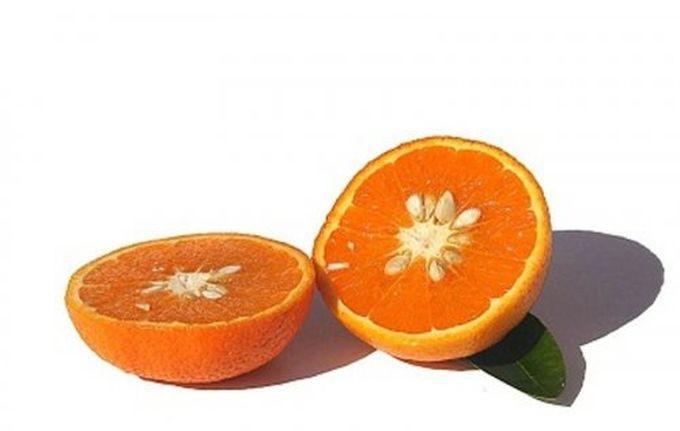 Тангор — гибрид танжерина и сладкого апельсина