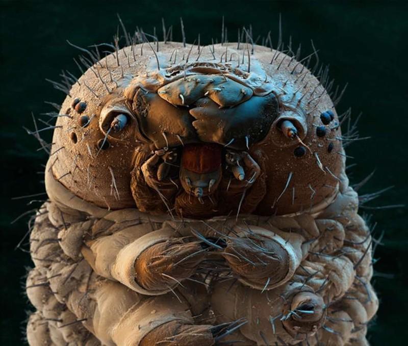 Гусеница под микроскопом
