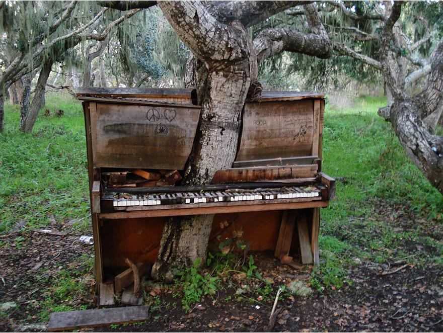 Дерево-пианино, Калифорния