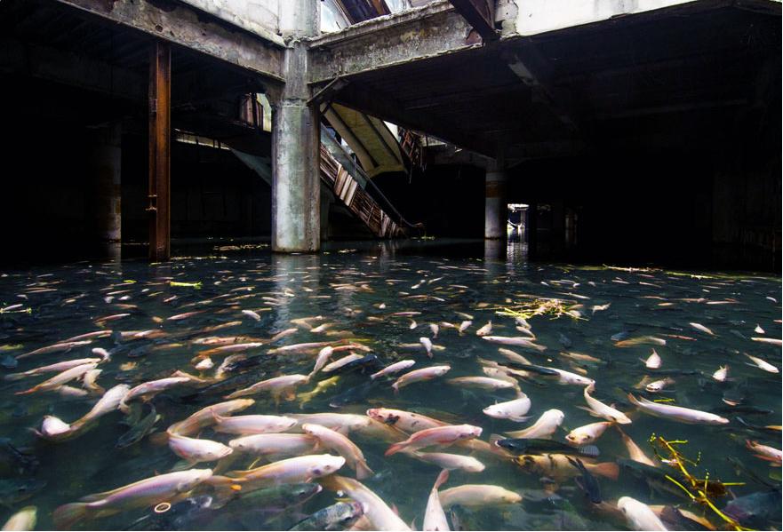 Естественный аквариум в заброшенном торговом центре Бангкока, Таиланд