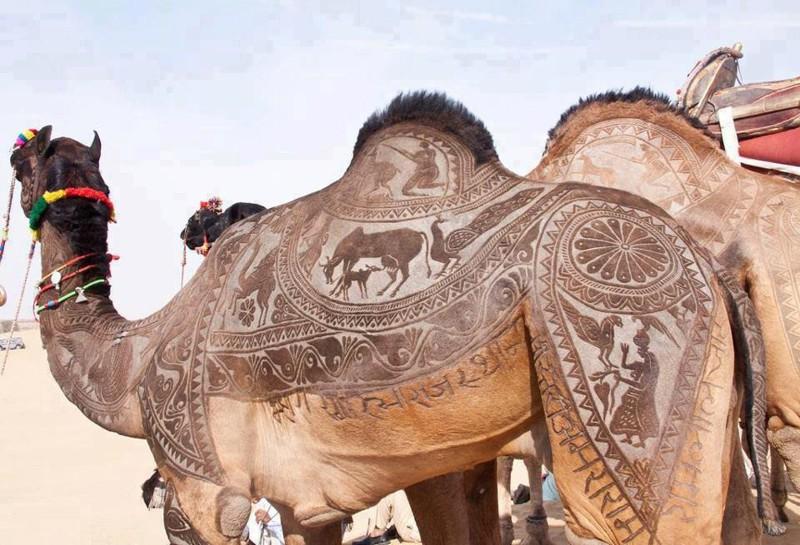 Стрижка верблюда