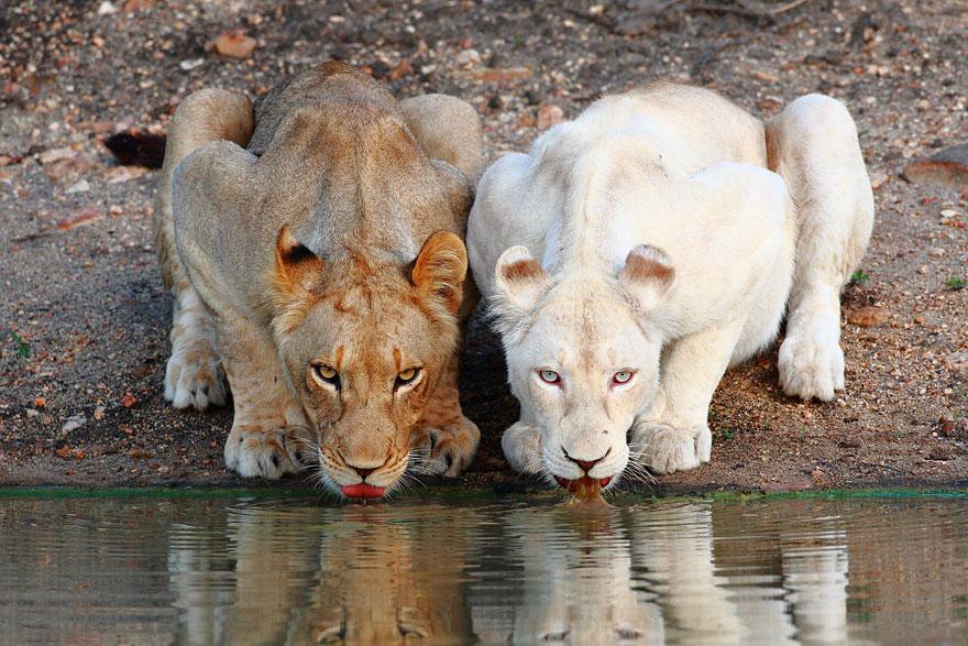 albino-animals-3-5__880