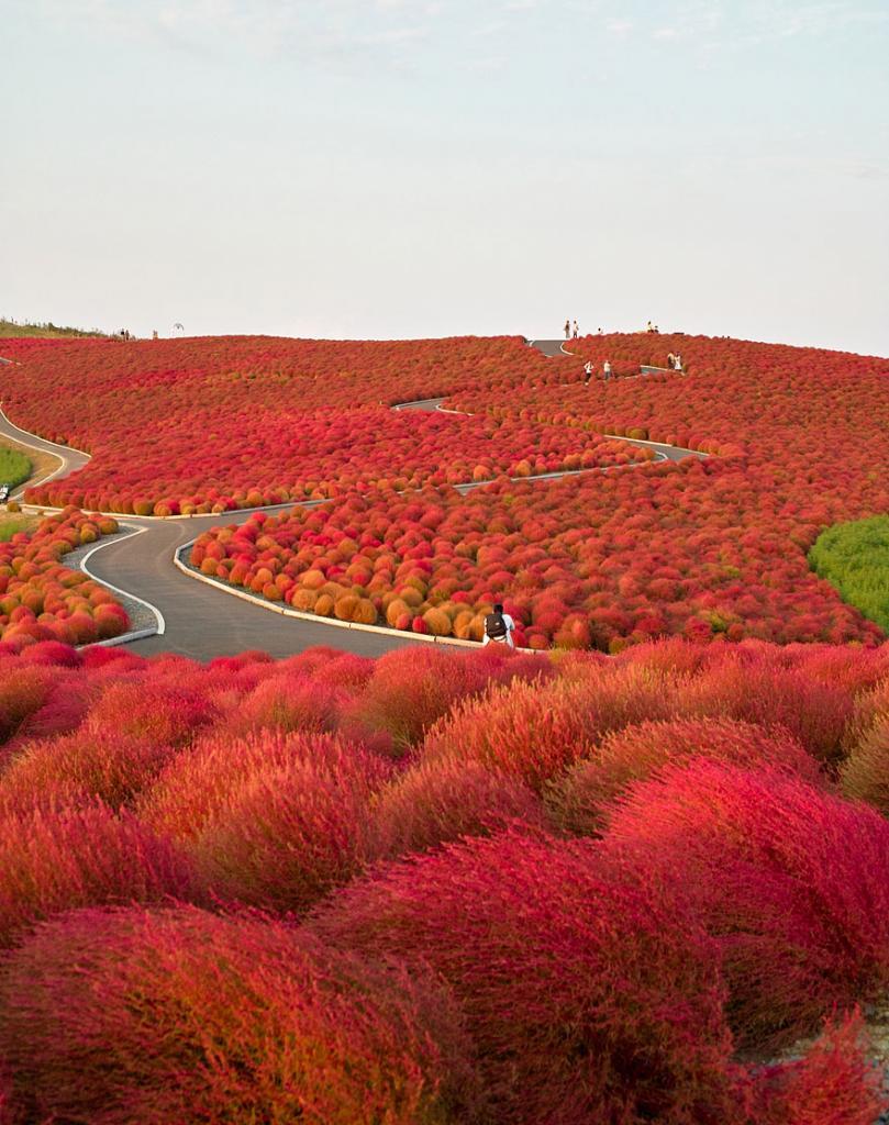 Парк Хитачи-Сисайд, Япония