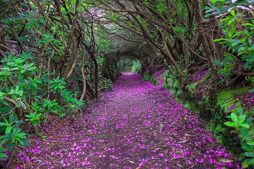 Кенмэр, Ирландия