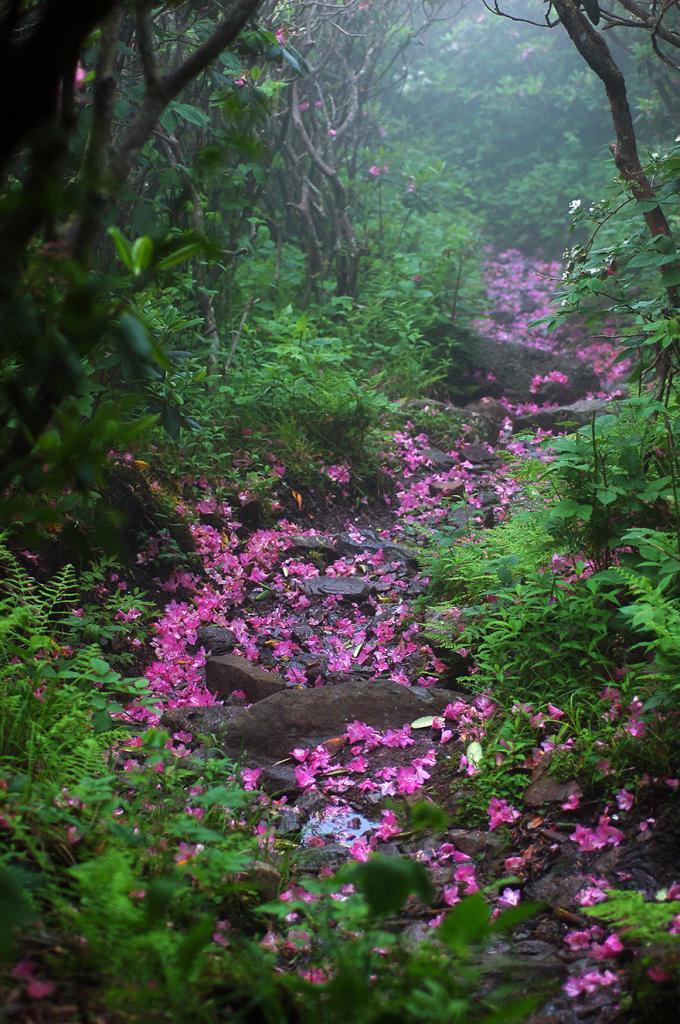 Гора Роджерс, Виргиния, США