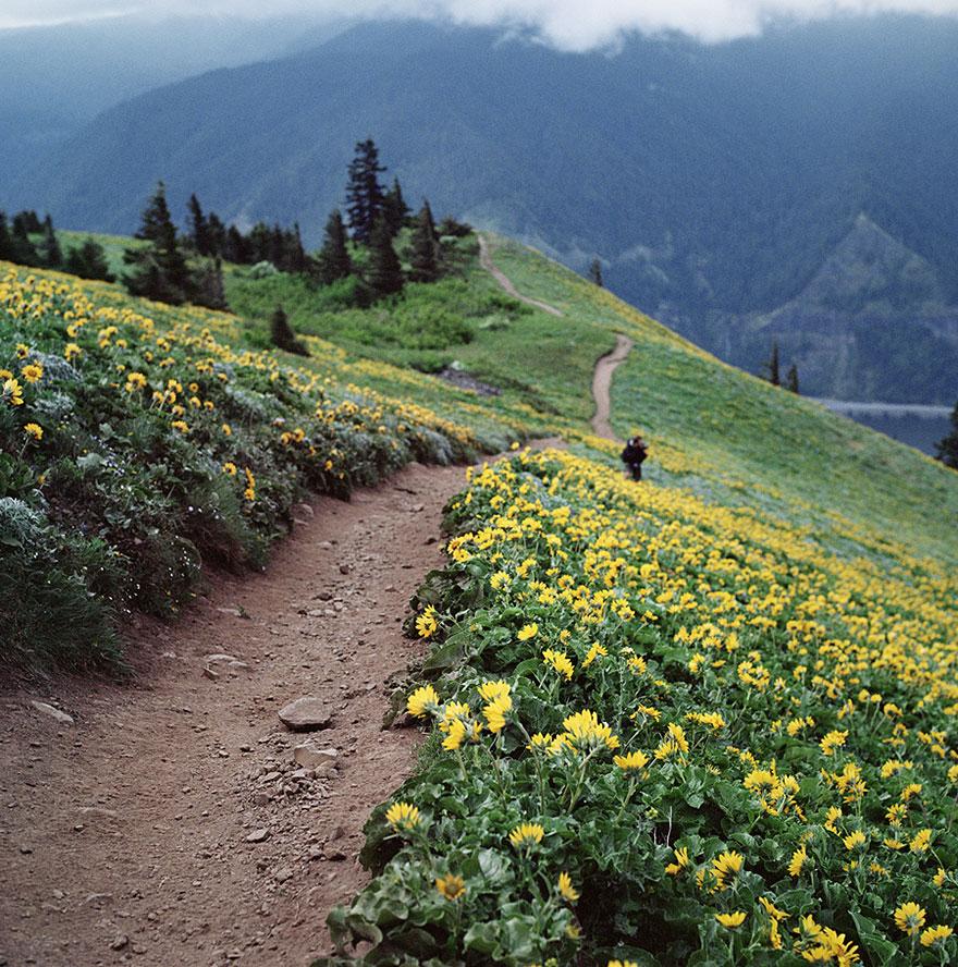 Гора Дог, Вашингтон, США