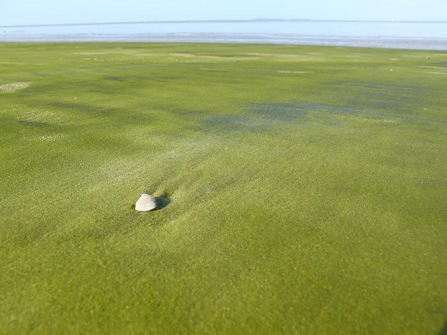 Пляж с зелёным песком, Куру, Французская Гвиана