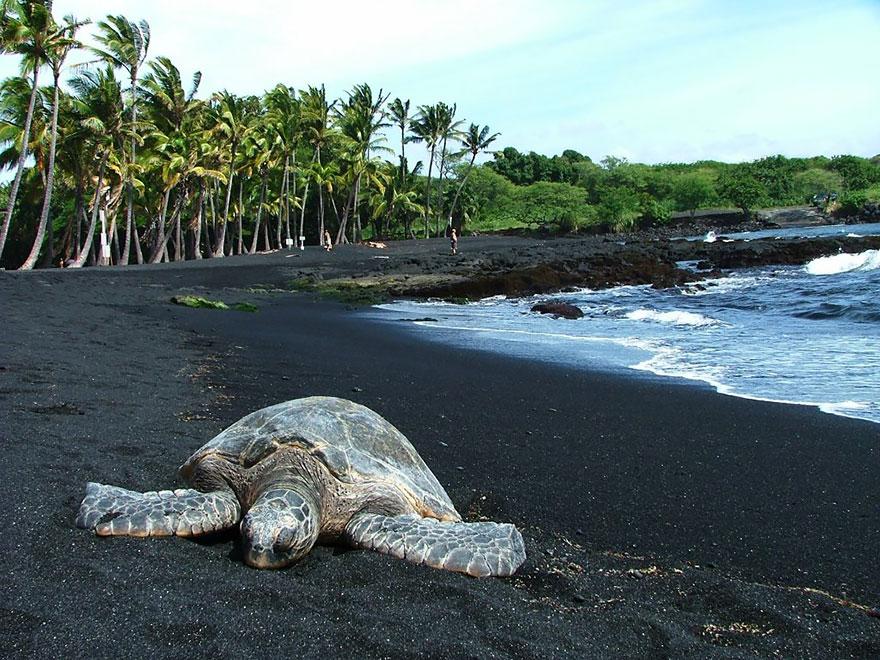 Пляж Пуналуу, Гавайи