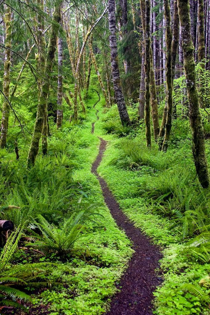 Национальный парк Олимпик, штат Вашингтон
