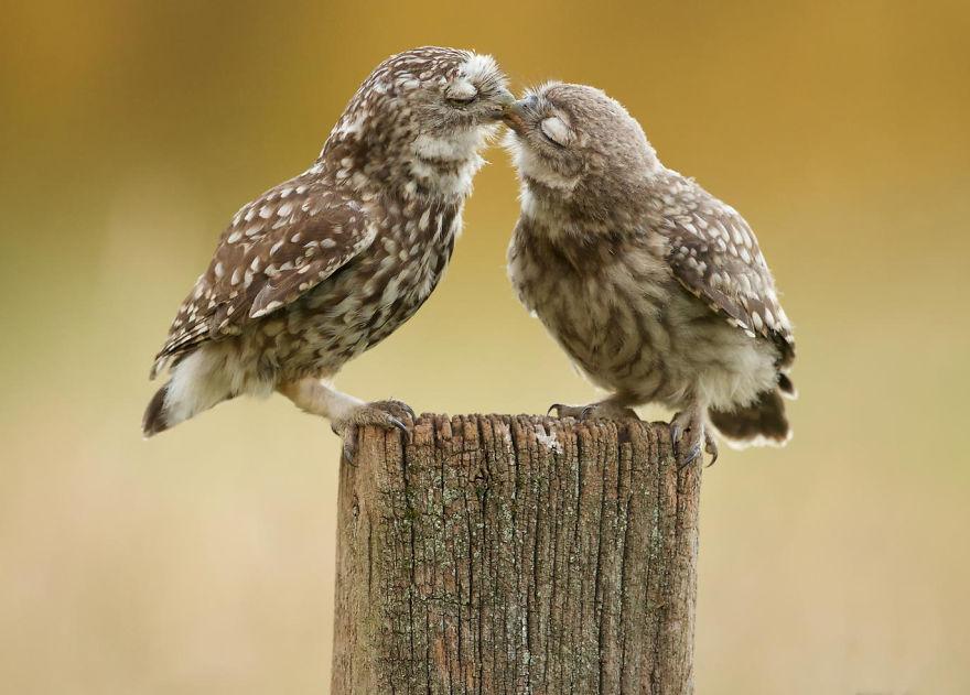 animals-love-couple-8__880