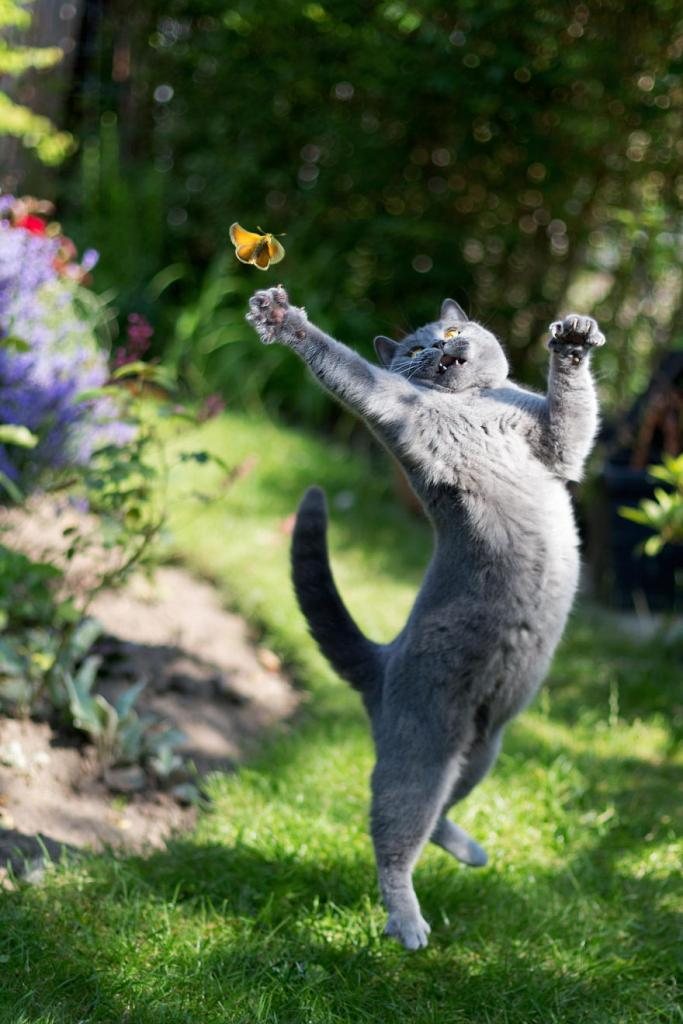 animals-with-butterflies-16__880