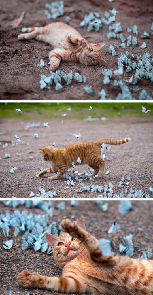 animals-with-butterflies-1__880