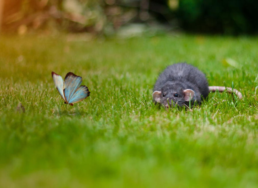 animals-with-butterflies-8__880