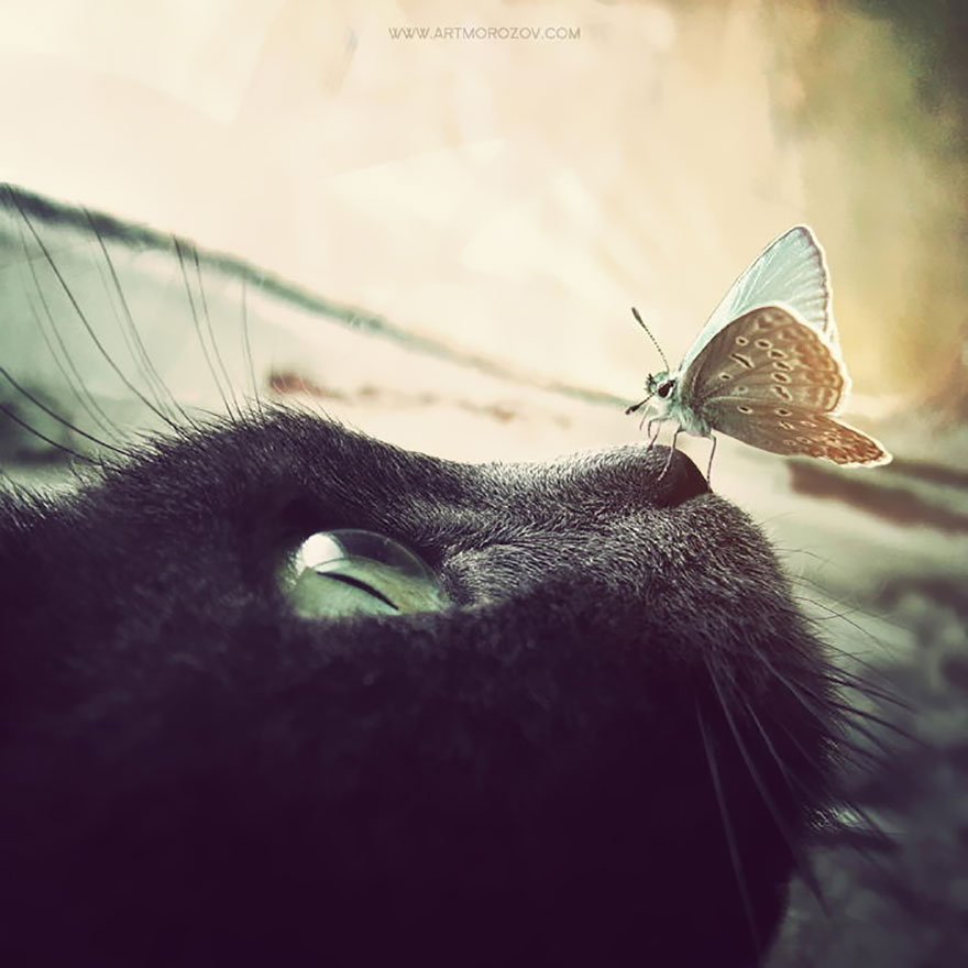 animals-with-butterflies-9__880