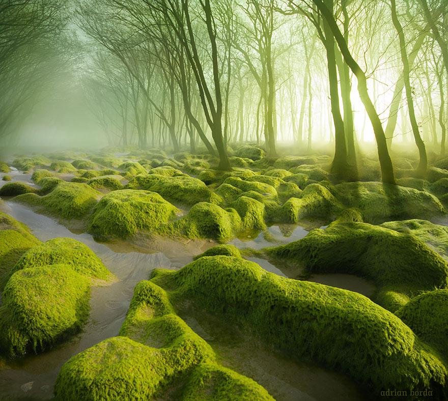 Болото Moss Swamp, Румыния