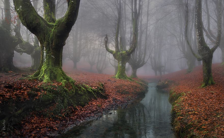 Лес Otzarreta, Испания