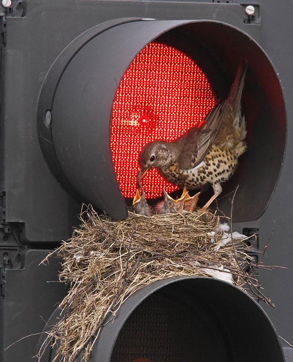 Гнезда птиц, обустроенные в самых непредсказуемых местах