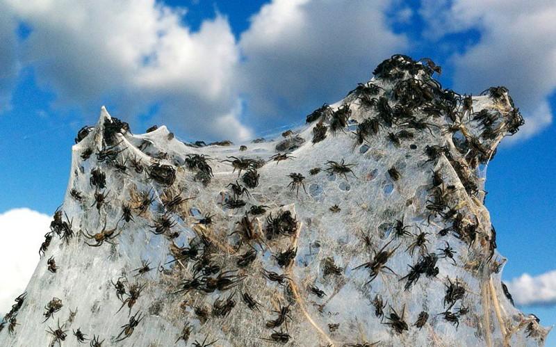 Стоит упомянуть и о насекомых. Здесь миллионы пауков