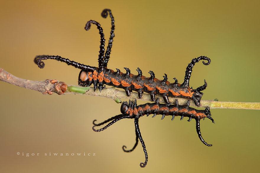 До и после. Трансформация гусениц в бабочек