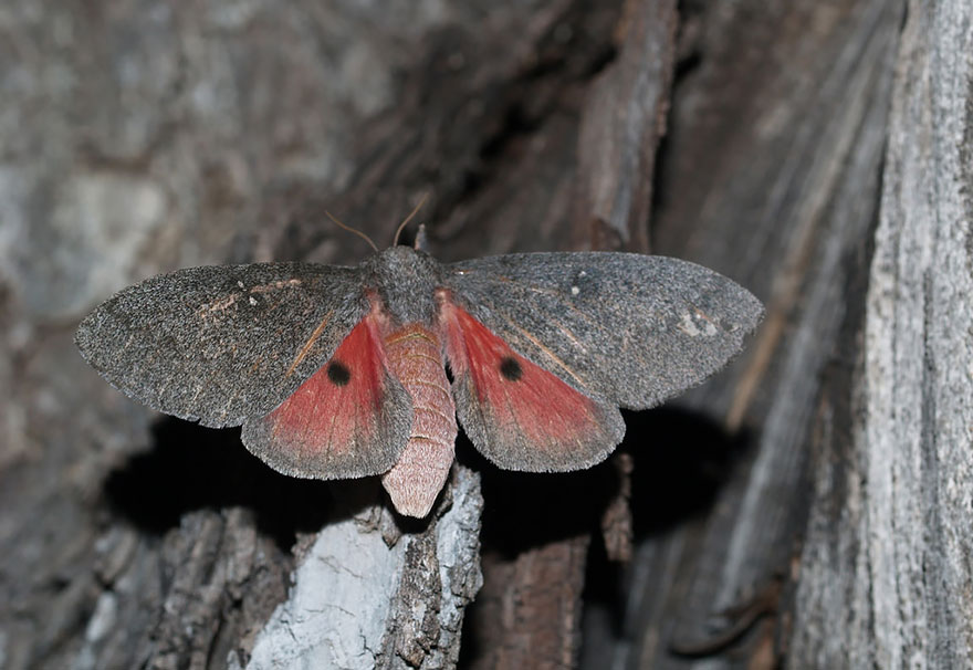 caterpillar-moth-butterfly-before-after-metamorphosis-13-2