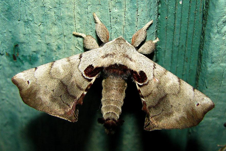caterpillar-moth-butterfly-before-after-metamorphosis-15-2